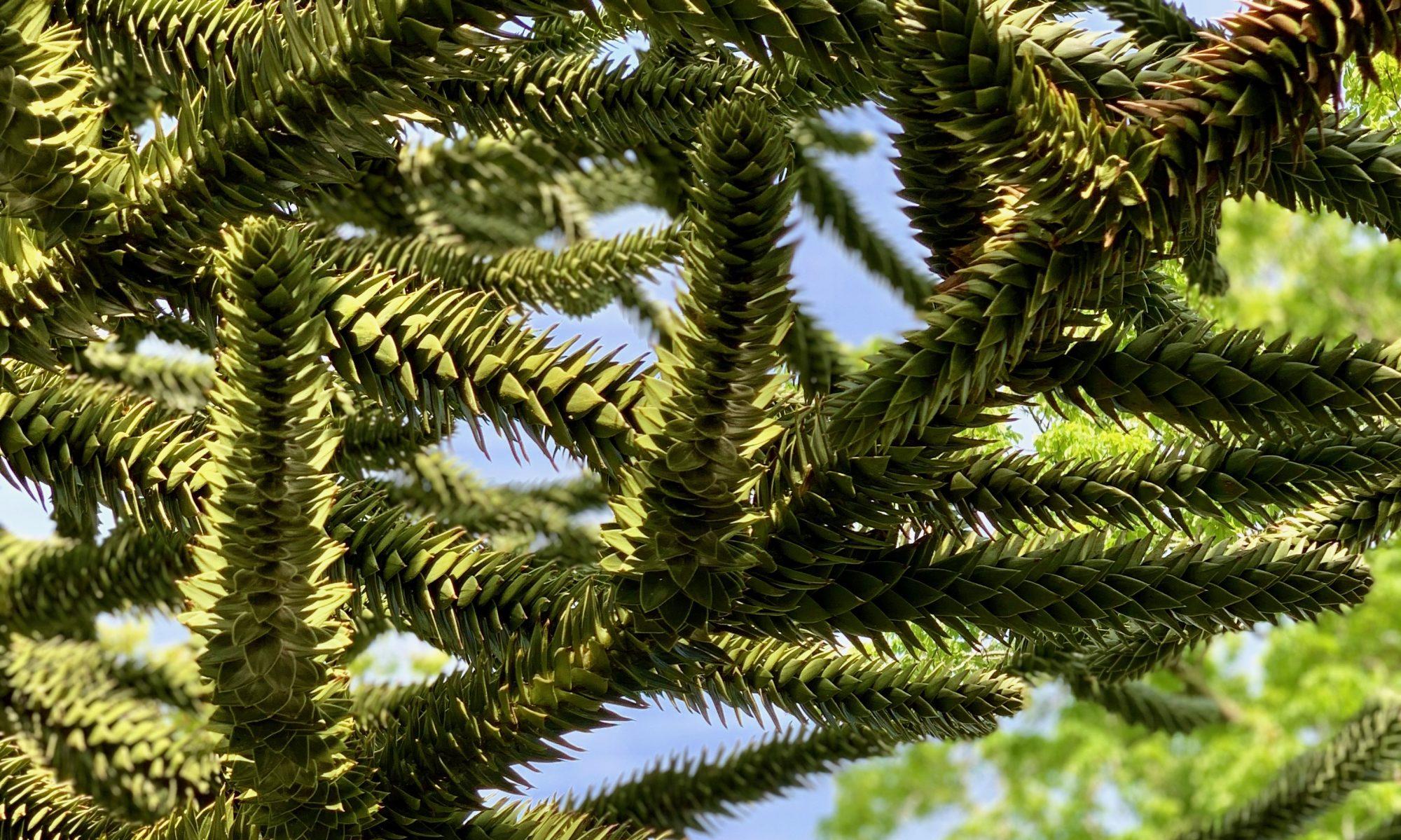 Arboretum de la Grande Lienne réouverture le jeudi 2 AVRIL 2020